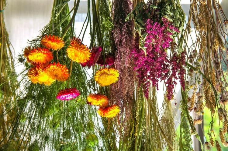 сушка цветов для поделок