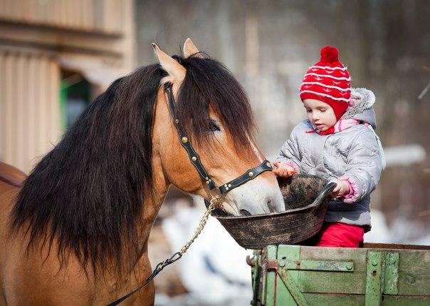 Верховая езда для детей