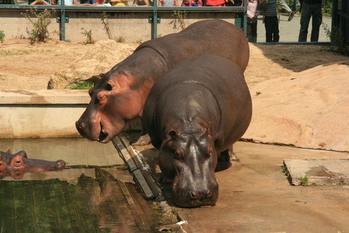 Зоопарки мира